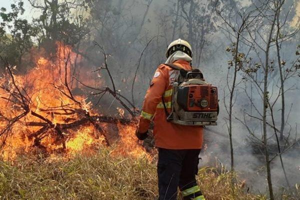 Bombeiro apagando incêndio florestal
