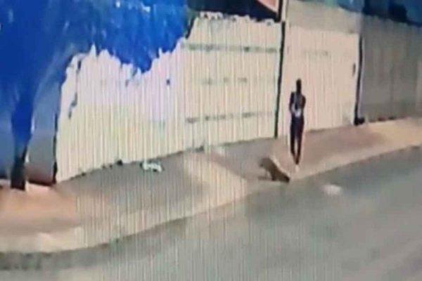 homem atira e atinge cão Gerente; animal acabou morrendo em Anápolis