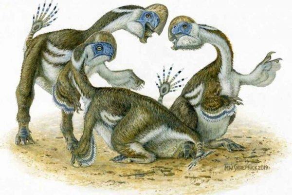 Dinossauro Oksoko avarsan parecido com um papagaio