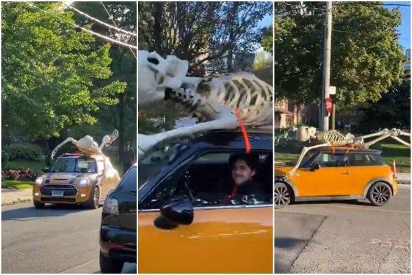 Homem compra esqueleto gigante