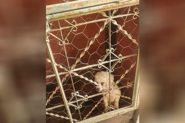 Policias resgatam cadela vítima de maus-tratos no DF