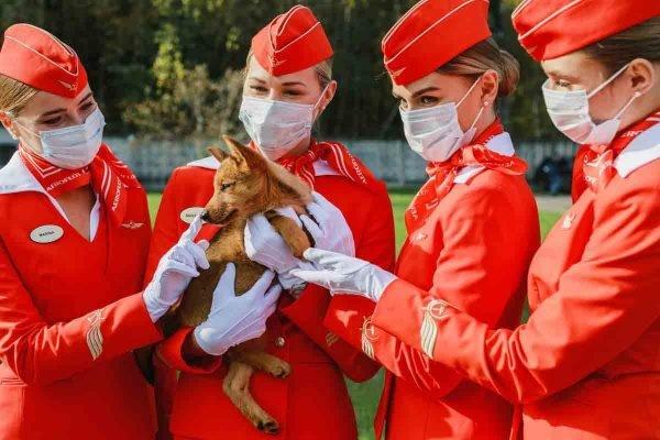 aeromoças russas com cão farejador