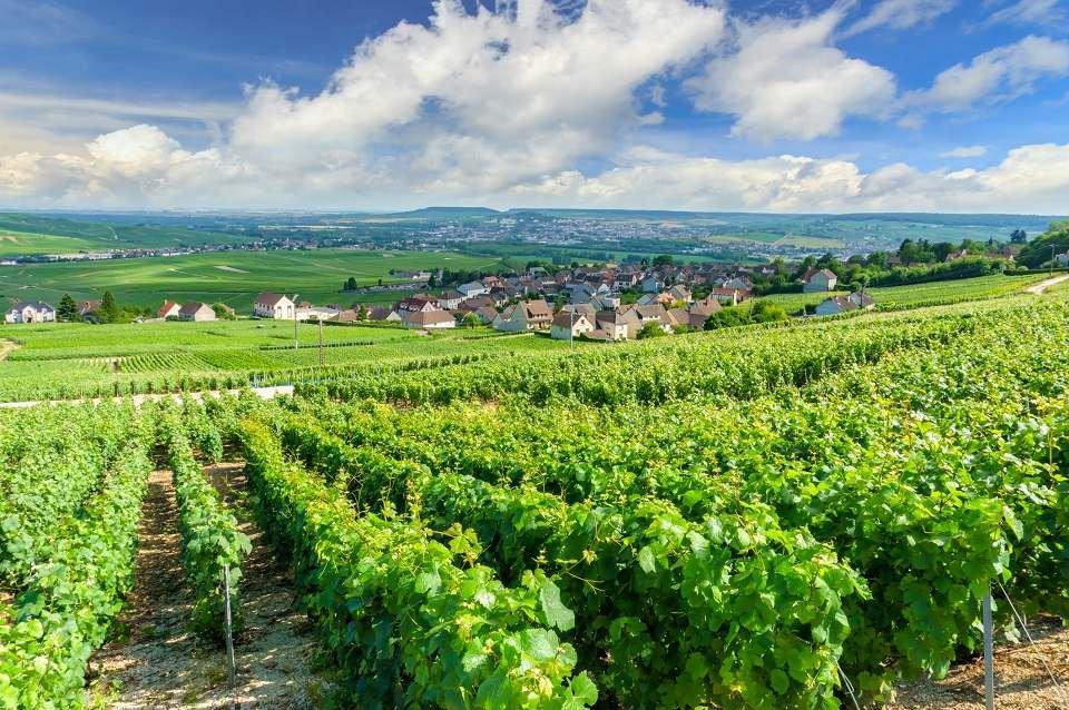 Vinícola em Champagne, França