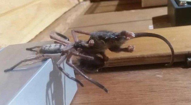 Spider in earphone