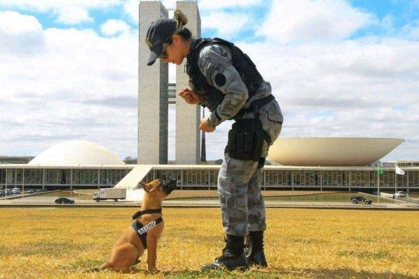 policial com cão