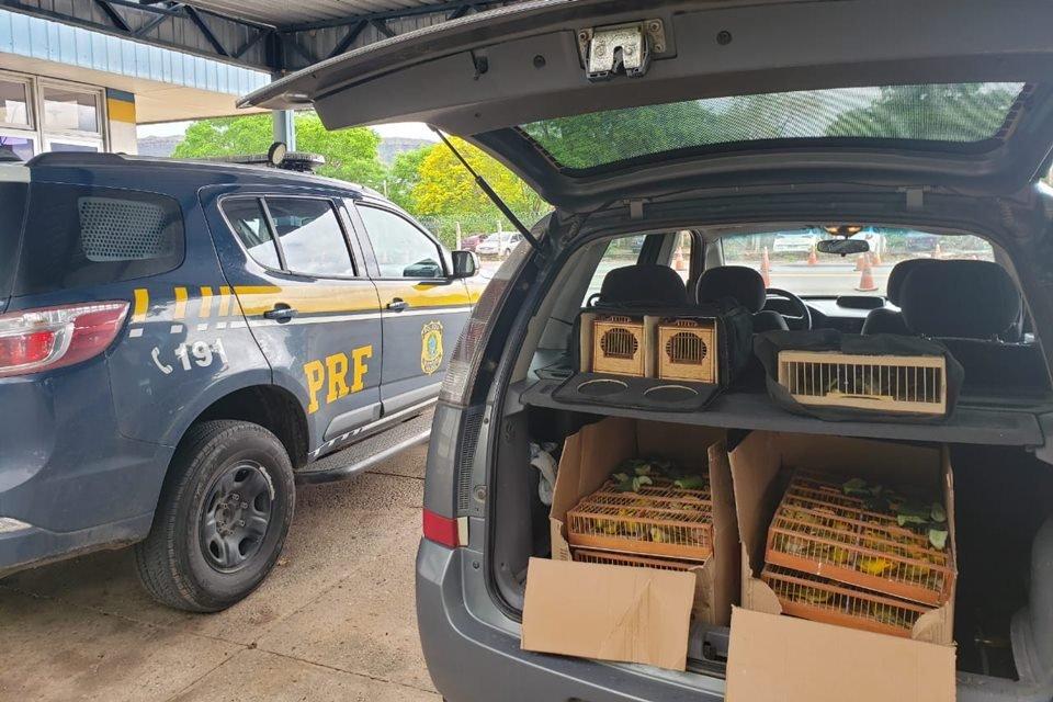 PRF apreende homem que transportava pássaros ilegais