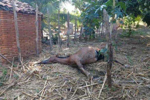 Cavalo estava em um cercado quando foi atacados pelas abelhas e morreu em um sítio na zona rural de Juazeiro do Norte