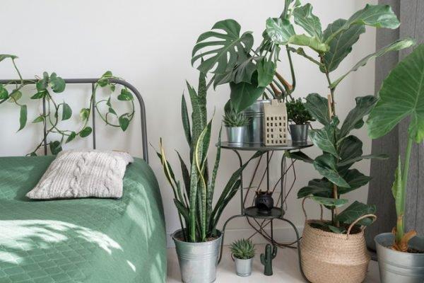 quarto com vegetação