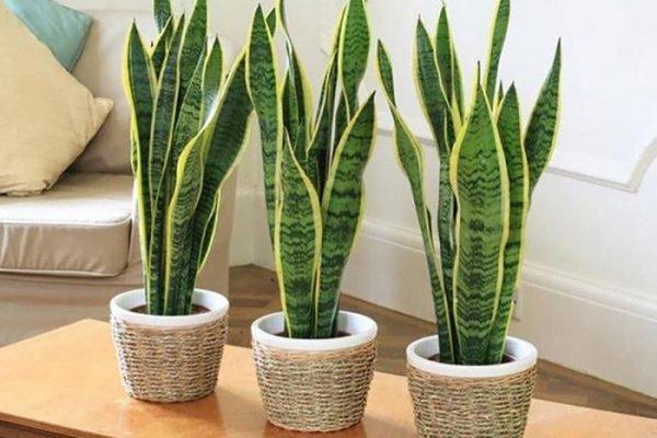 planta em vasos em casa