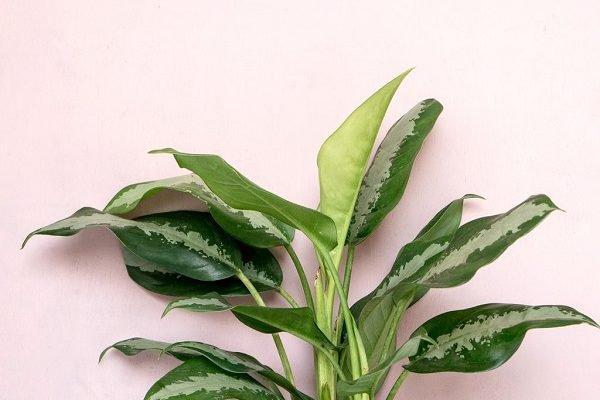 planta encostada em parede