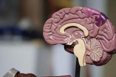 memória cérebro perda de memória