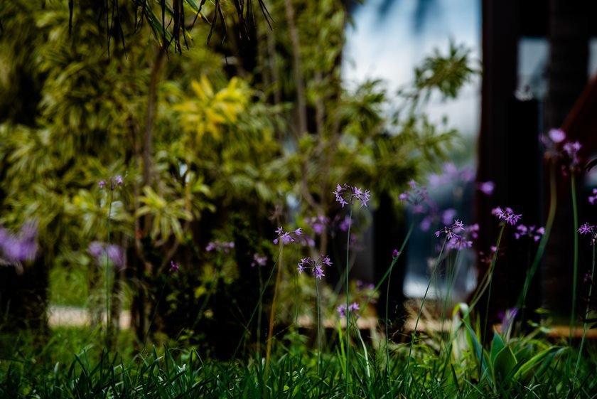 Jardim do Pontão do Lago Sul