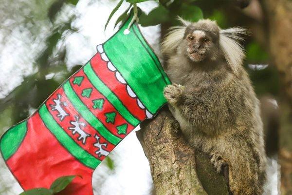 Animais do Zoológico de Brasília ganham presentes de Natal