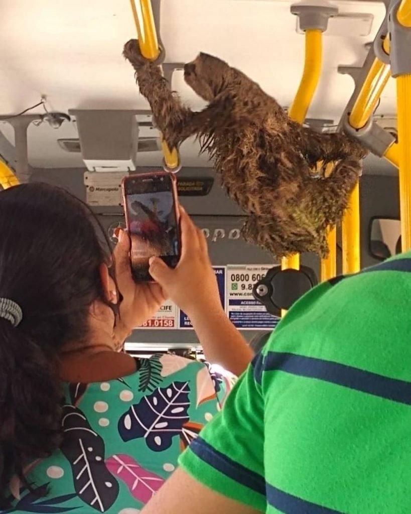 Preguiça em ônibus no Recife