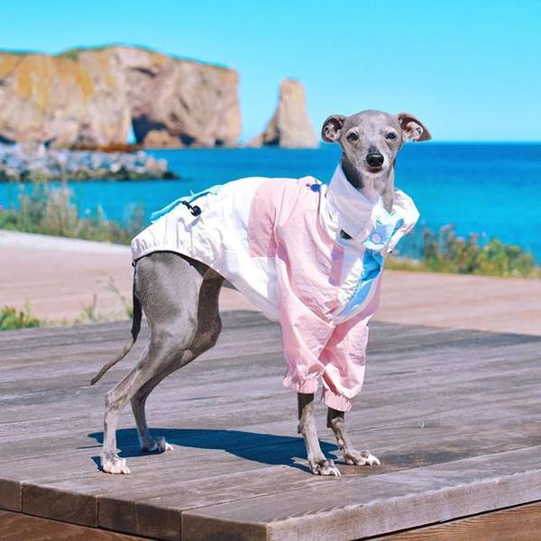 Cachorra com roupa estilosa