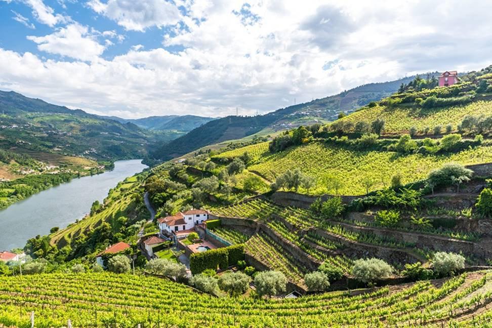 Pequenas vinícolas em Douro