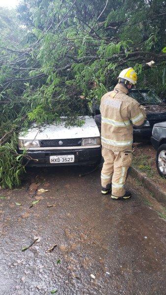 árvore em cima de carro