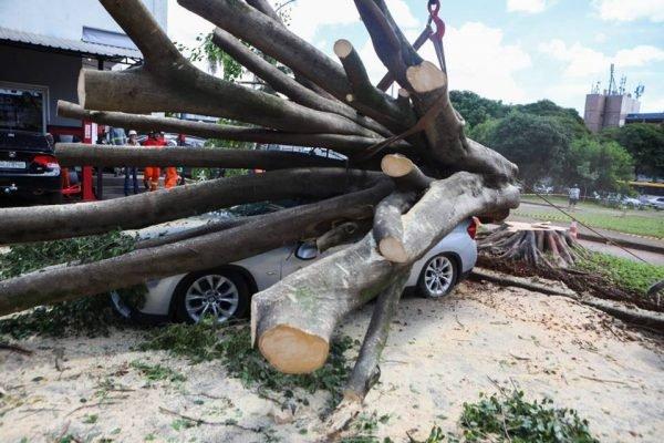 BMW destruída por árvore