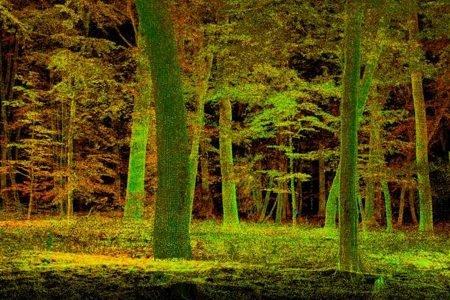 Floresta primitiva