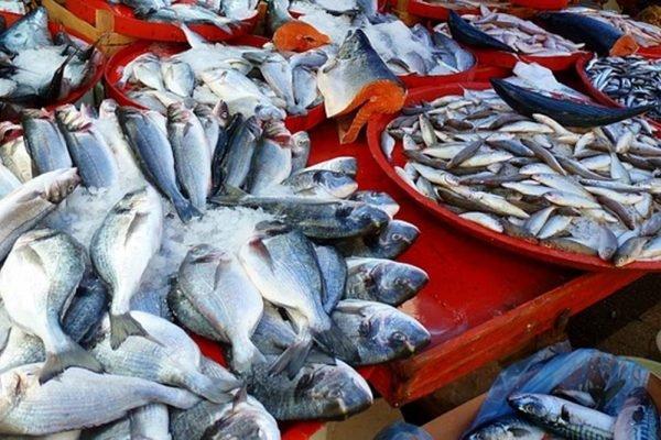 Peixes mortos em bacias de gelo
