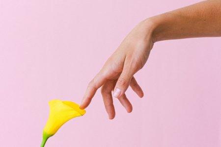 mão tocando flor