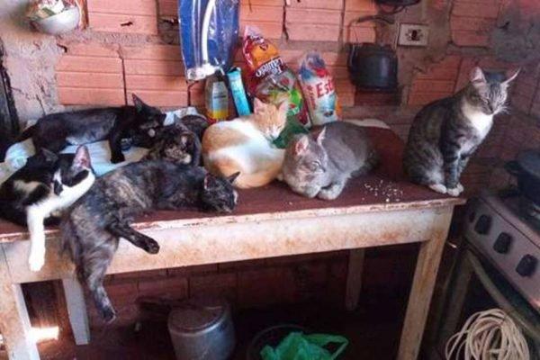 Idosa pede ajuda no Mato Grosso do Sul para criar 27 gatos