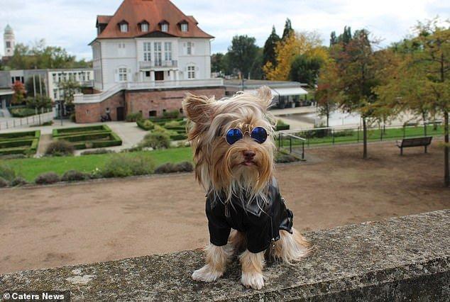 Cachorro com topete de Elvis Presley