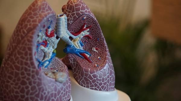 Maquete de um pulmão
