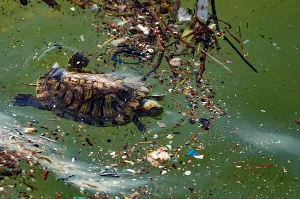 Tartaruga nadando no mar poluído