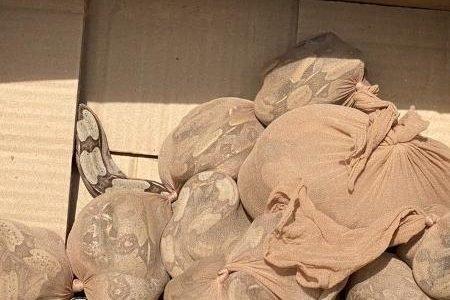 Caixa com 15 cobras é apreendida em agência dos Correios em SP