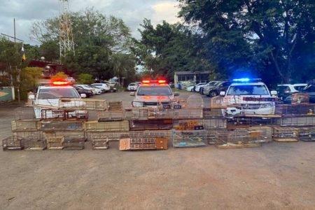gaiolas empilhadas a frente de carros da polícia