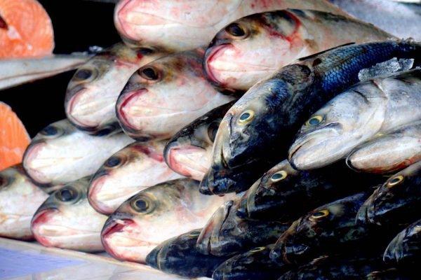 peixes em peixaria