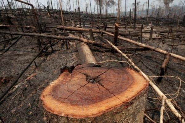 Março de 2021 bate recorde em alertas de desmatamento na Amazônia