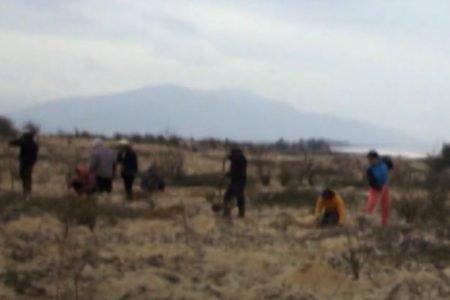 Moradores de vila do Vietnã fazem reflorestamento