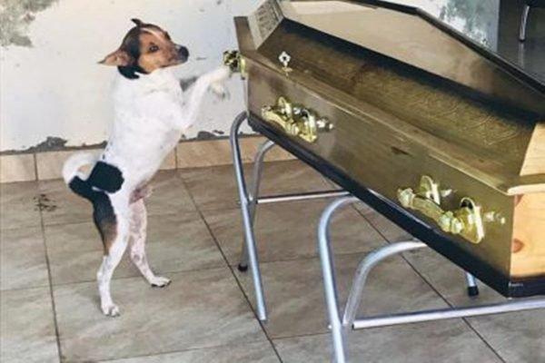 Cachorro ao lado de caixão