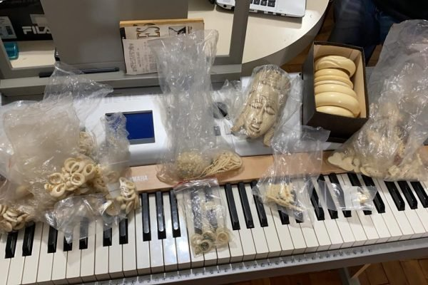 Comercio ilegal de marfim