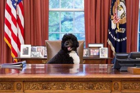 Cão sentado em cadeira na Casa Branca