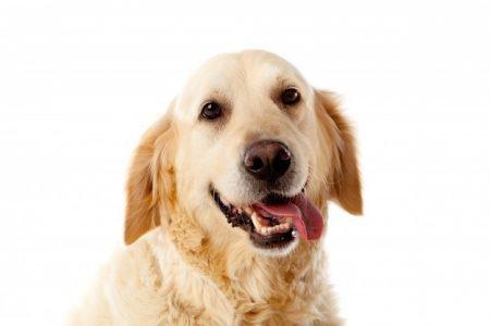 Cachorro com a língua pra fora