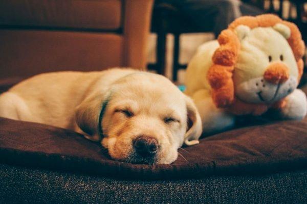 Brinquedo de pelúcia para cachorro