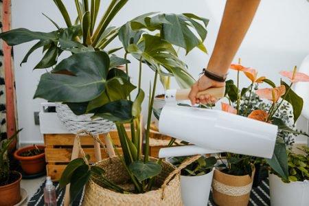 Homem regando as plantas