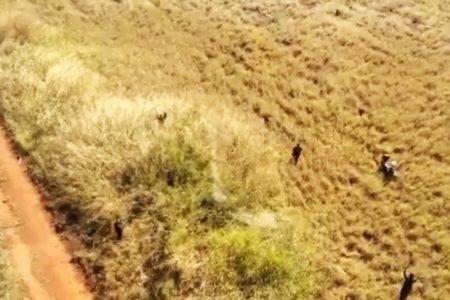 Imagem aérea de prisão de ladrão no Paranoá Parque