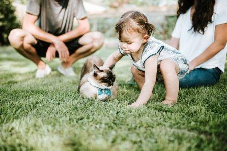 criança gatinho