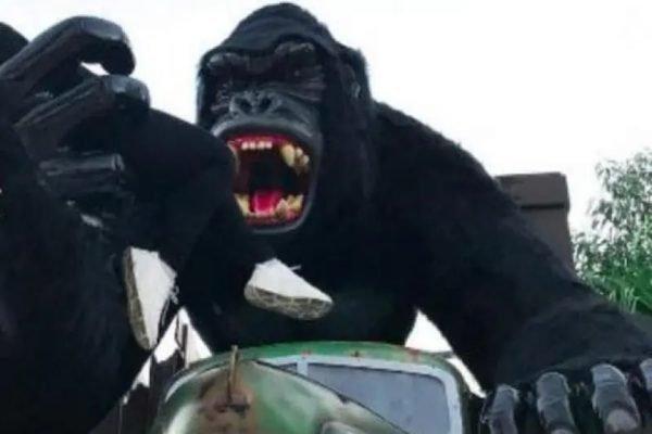 Gorila de onde a crianca caiu no Beto Carrero