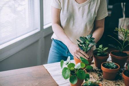Mulher cuidando das plantas