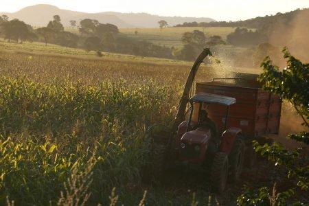 uso irregular de agrotóxicos na alimentação de bovinos em goiás