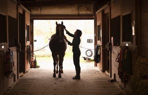 mulher cuidando de cavalo