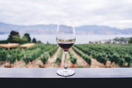 Taça de vinho em mureta com vinhedo ao fundo