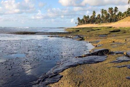 oleio praias do nordeste