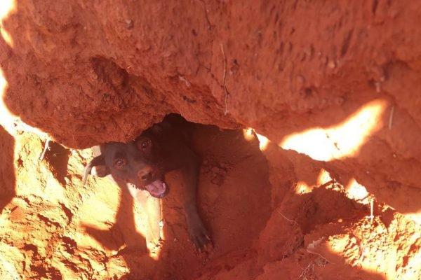 goias cadela e filhos soterrados