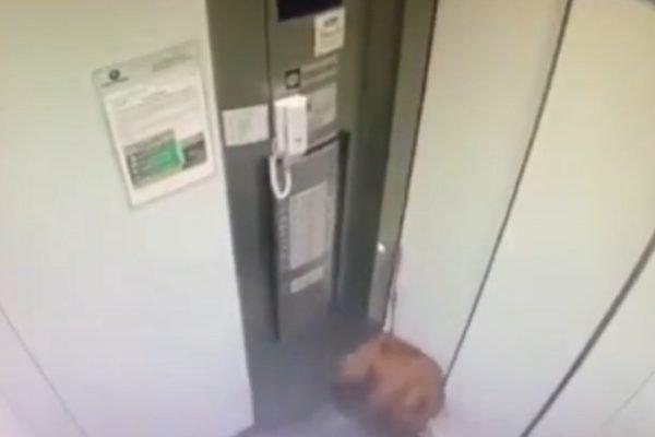 Cachorro fica pendurado com coleira presa a elevador